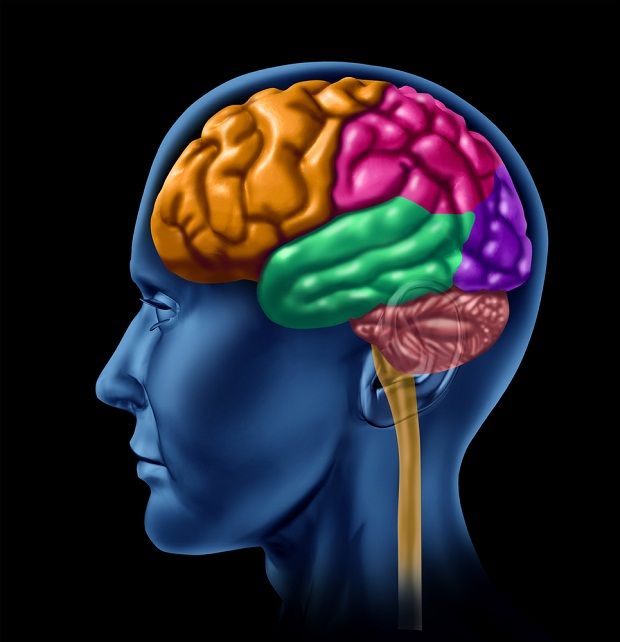 Beyin Damar Tıkanıklığında Bitkisel Çözüm    Tıpta beyin krizi olarak adlandırılan ciddi ve önemli bir hastalıktır.    Beyin damar tıkanıklığı, beyindeki temiz ve kirli kan taşıyan damarın beyne gelen bir pıhtı veya damar sertliği parçası ile tıkanması sonucunda oluşur. Ayrıca, bir damarın ileri derecede büzüşmesi sonucunda beynin kansız, oksijensiz ve besleyici maddelerden yoksun kalmasıyla oluşmaktadır.