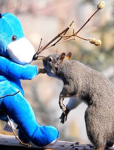 Where'd you find that peanut tree? ...Are there any more?