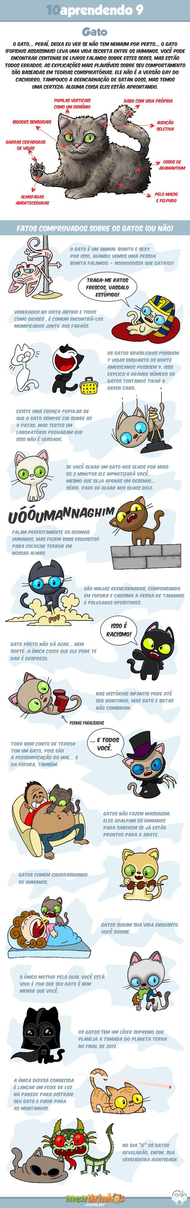 10aprendendo com o Coala #9 - Gatos