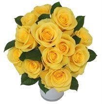 Beautiful Yellow #Roses delivered free from http://www.flyingflowers.co.nz/yellow-roses #yellowroses