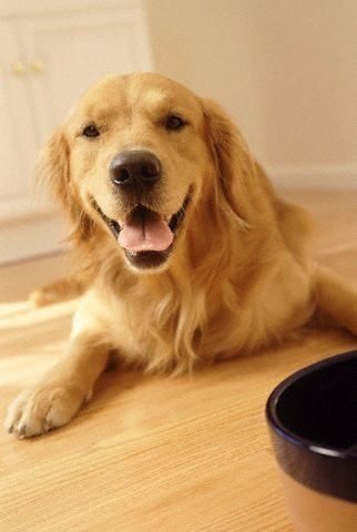 I've know since I was little I want a golden retriever when I'm older!:) Soooo god with kids too!:D