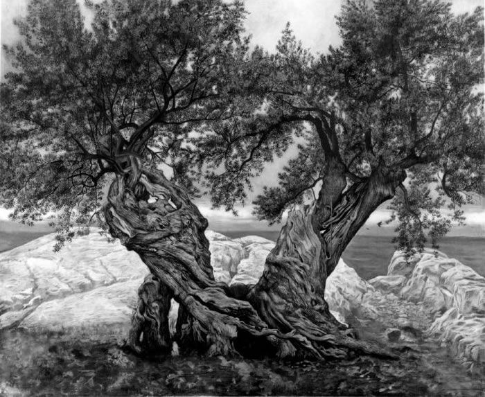 Olive trees - two in one - bound together even as they grow apart.