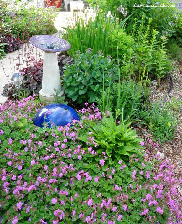 Geranium Biokovo Karmina is a Garden Win - Shawna Coronado