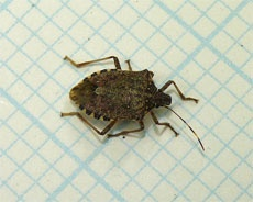 Stink Bug Control: How To Get Rid Of Stink Bugs  Linda Bauwin - CARD-iologist  Helping you create from the heart.