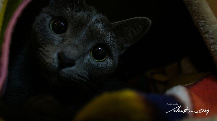 Cat BORI