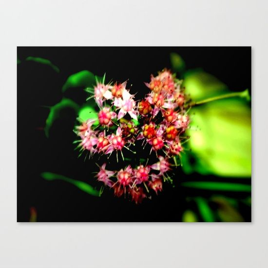 Cacti (Cactaceae) Canvas Print