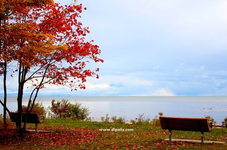 A bench by the river. Photo by Dipali S. -- National Geographic Your Shot