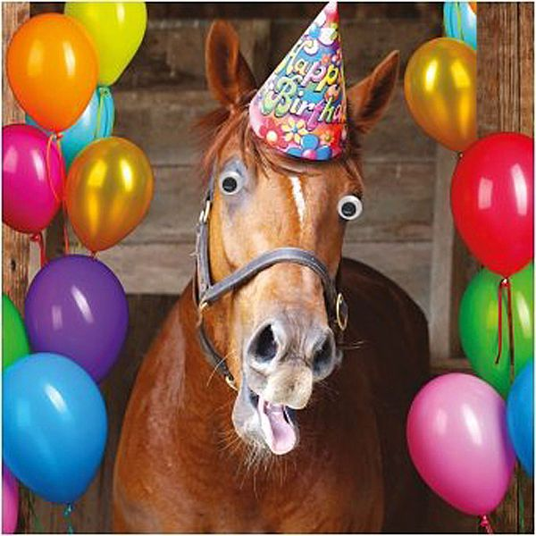 Funny Humour Greeting Card Birthday 3d Moving Eyes Horse