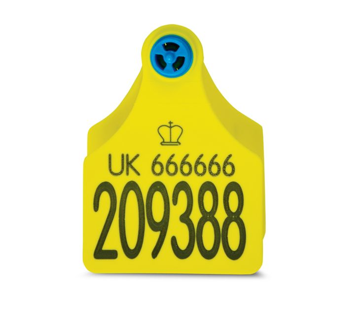 Large Blue Helix Cattle Tag - Primary  Secondary #Cattle #Tags #CattleTags #BlueHelix