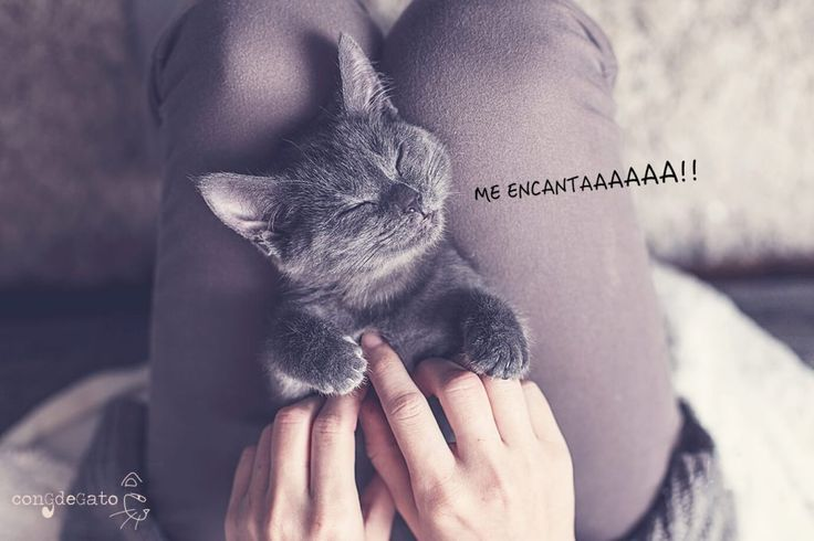 gato-panza-arriba