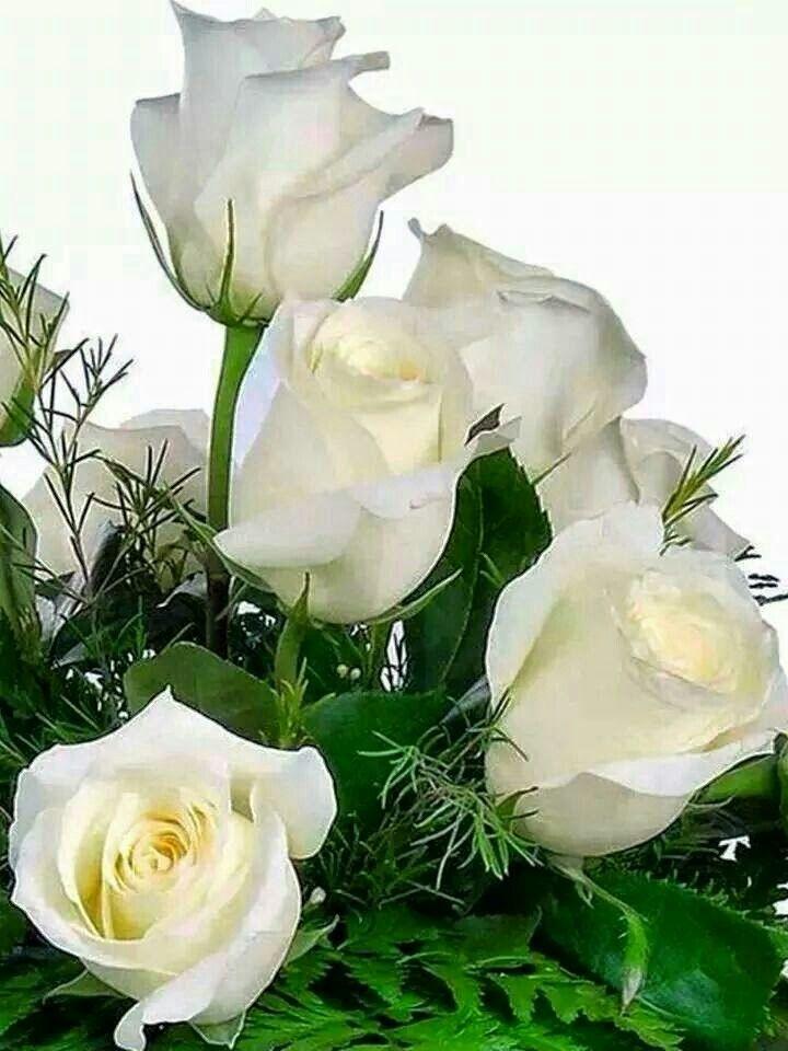 Открытка белые цветы букет, денег евро доллар