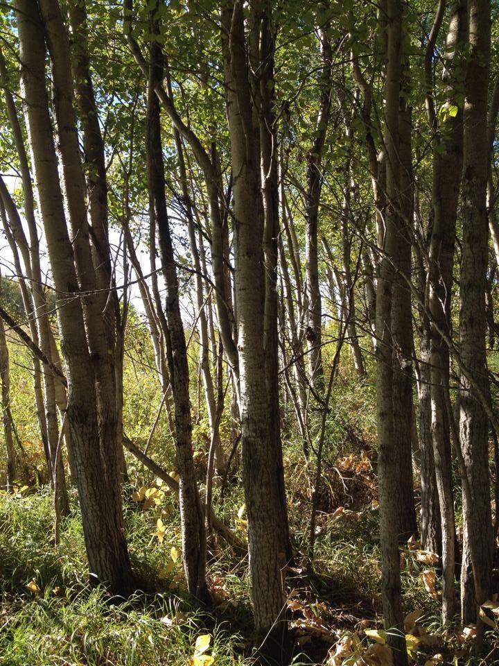 The bush, Saskatchewan