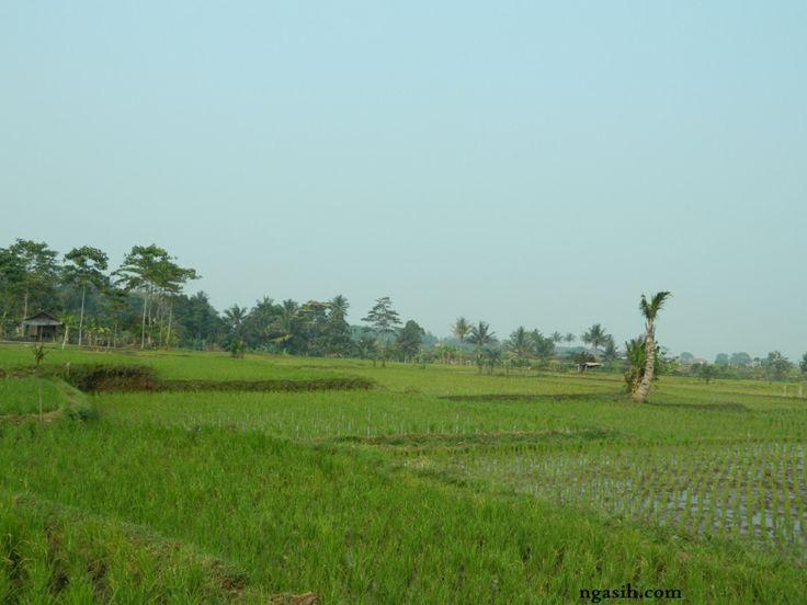 paddy field ecosystem