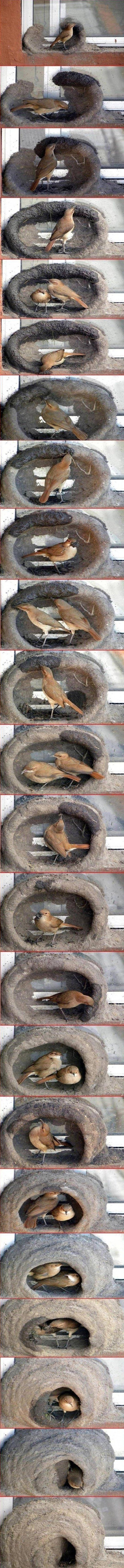 Und so entsteht ein Vogelnest