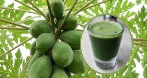 Como Beber Jugo de Hojas de Papaya Para Desintoxicar el Hígado, Revertir el Hígado Graso y Detener el Cancer del Mismo.