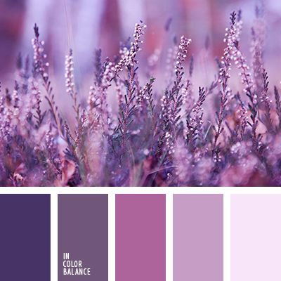 dark purple, light purple, monochrome violet colour palette, pale lilac, pink and lilac, purple, rich lilac, rich purple