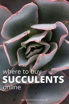 http://www.succulentsandsunshine.com/where-to-buy-succulents/