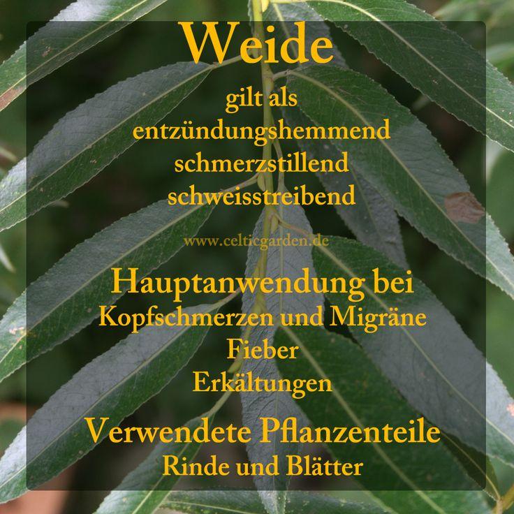 Hasellaub wird gerade bei Schutzräucherungen verwendet. Schon die Germanen nahmen es für ihre Zeremonien und stimmten ihre Götter dadurch sanft und milde. Eine Hasel-Räucherung gibt uns mentale Stä…