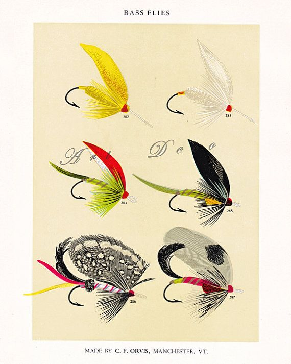 fly fishing print with bright and colorful Bass fish by artdeco, $4.00