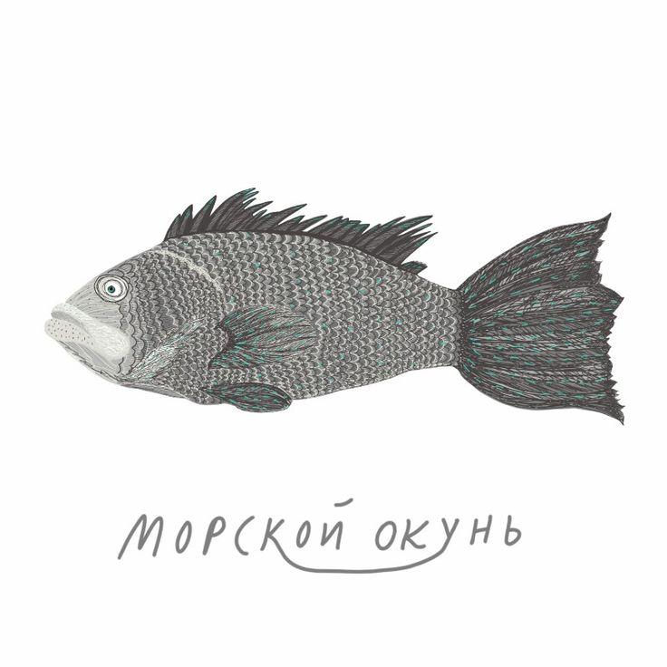 Sebastes fish