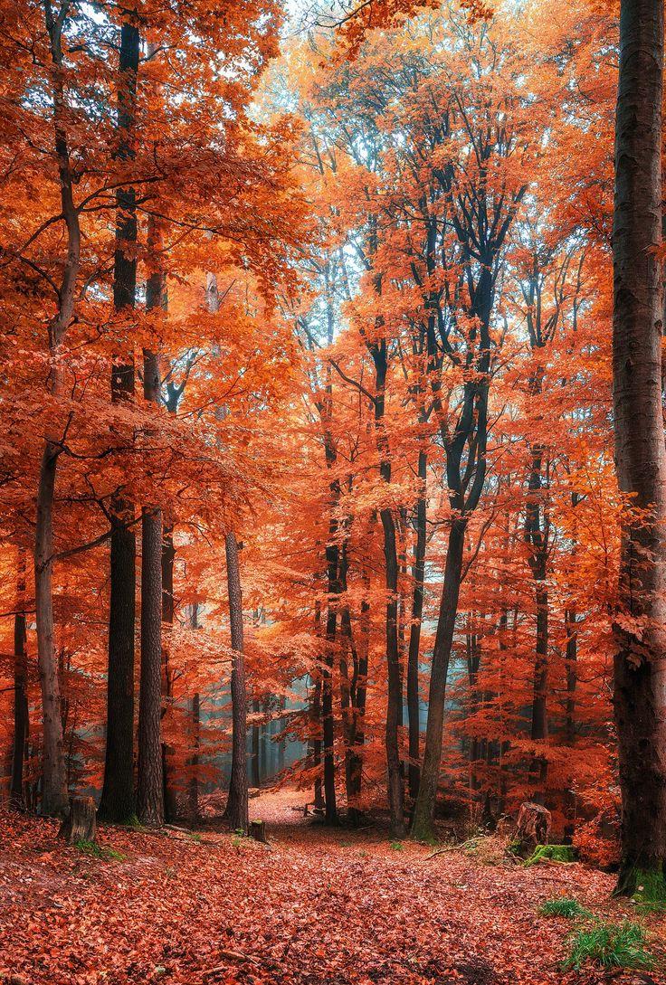 Hidden Path by Sebastian Tontsch on 500px