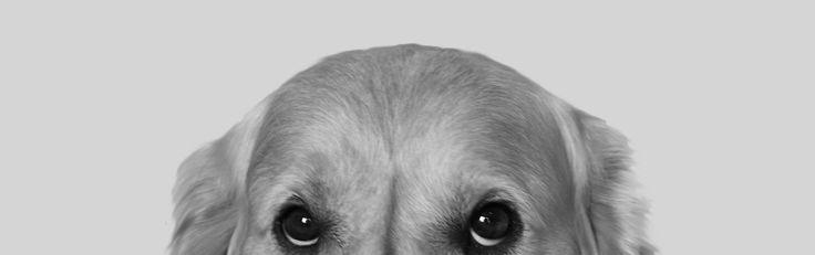 Comportementaliste canin et éducation animale | Suisse Romande, Neuchâtel, Lausanne, Genève, Yverdon, Fribourg | Cynopsis