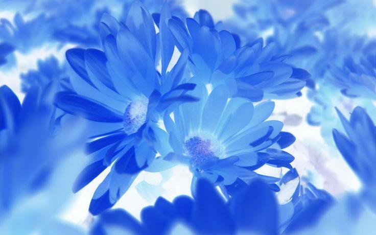 Desktop backgrounds wallpapers flowers HD #Flower #Flowers #Wallpaper #Wallpaper…