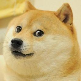 The Original Doge | Doge | Know Your Meme
