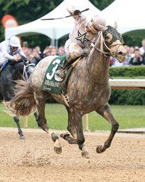 Creator grade 1 winner by Tapit out of Morena by Privately Held