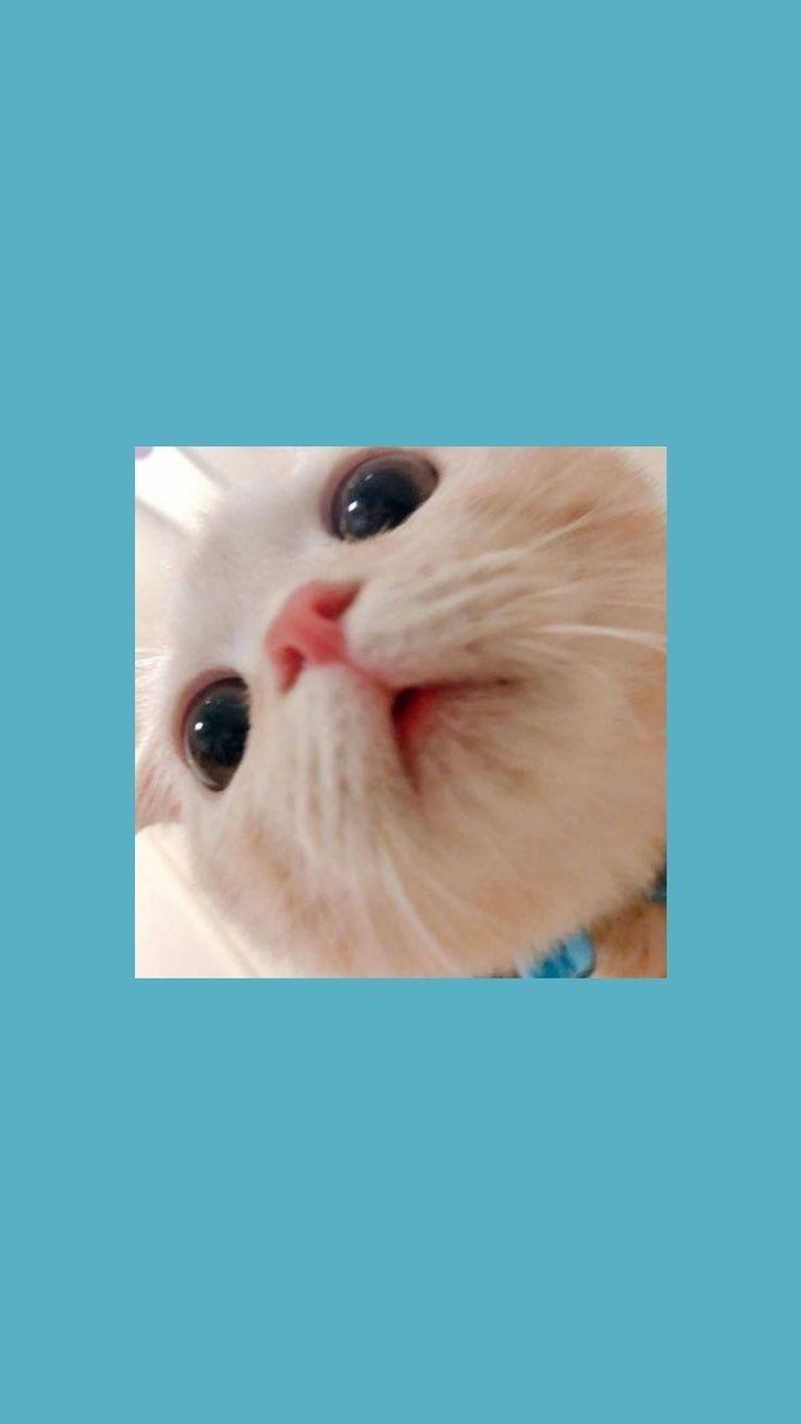 Medida Certa Cat Phone Wallpaper Cute Cat Wallpaper Cartoon Wallpaper Cute cat wallpaper images