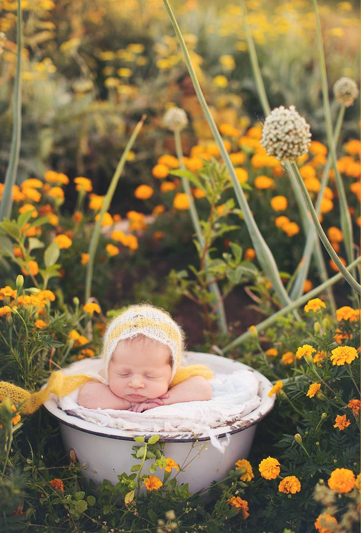 Oh my! I would die for a flower garden like this by my house!! Love this newborn pic!  Erin Tole Photography credit