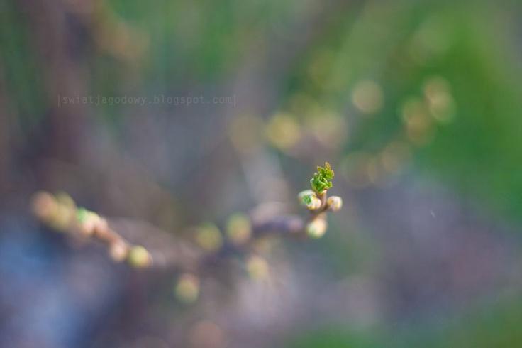 spring time JAGODOWY ŚWIAT