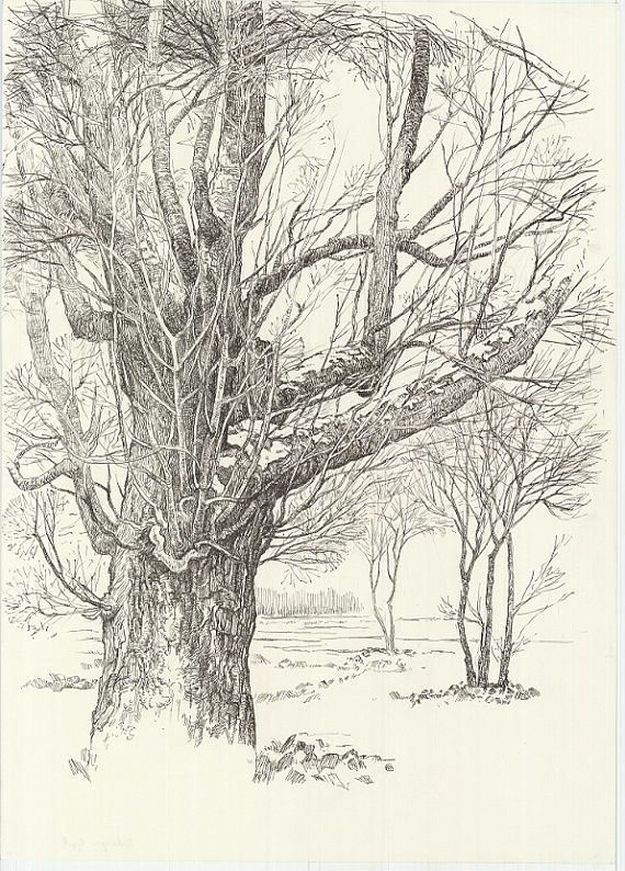 this is an original tree drawing made with pen on paper. This original forest drawing, woodland drawing was made in 2016.