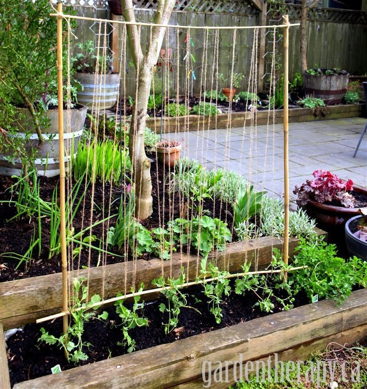 For plants that like to climb, like the peas seen here, a trellis made of bamboo and twine is helpful — and pretty! Get the tutorial at Garden Therapy »  - GoodHousekeeping.com