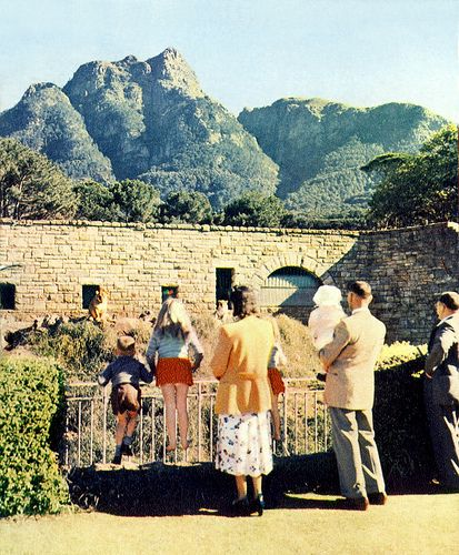 Groote Schuur Zoo, Cape Town, 1951.
