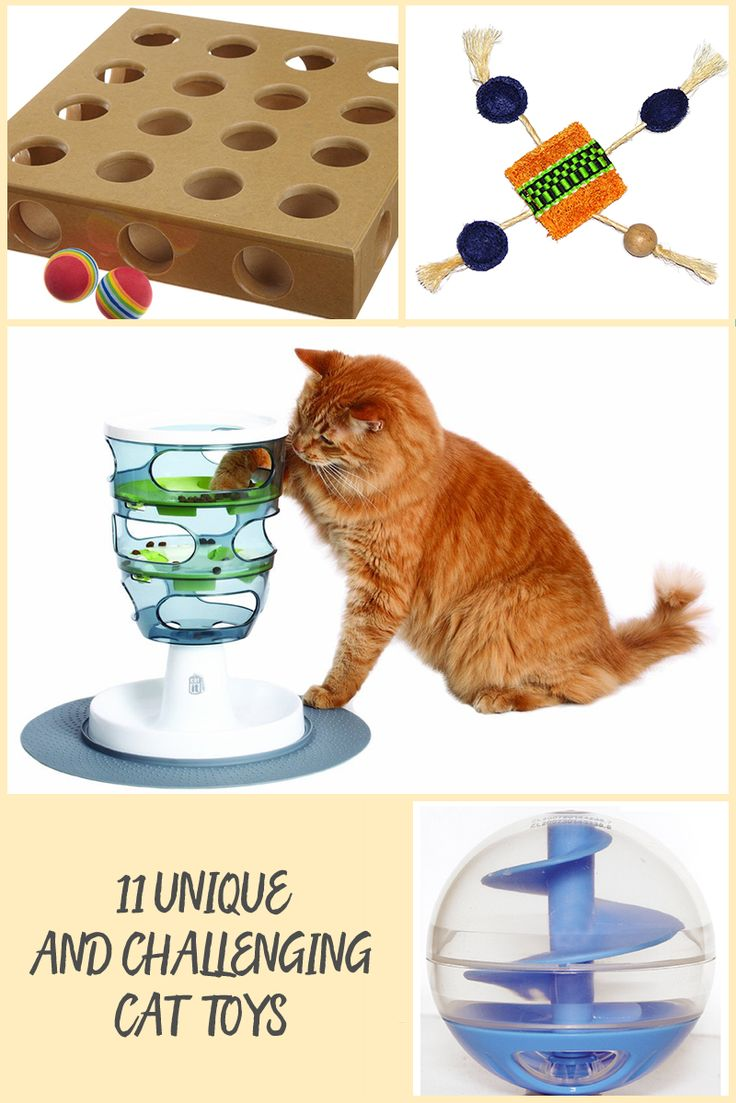Puzzle toys and interactive toys are a great way to keep your cat both physically and mentally active. If your pet tends to overeat and needs more physical activity, a food dispensing game can be a good way to both control food intake and guarantee that your pet gets some exercise. Cats tend to love puzzles, and will spend hours playing with a puzzle box. Whichever the need, these unique and challenging cat toys are perfect for you.