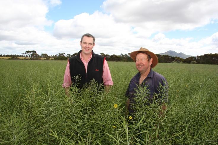 #Australian #canola grower Mark Adams with Matt Ericsson in Mark's #IH50RR field. #agriculture #farming