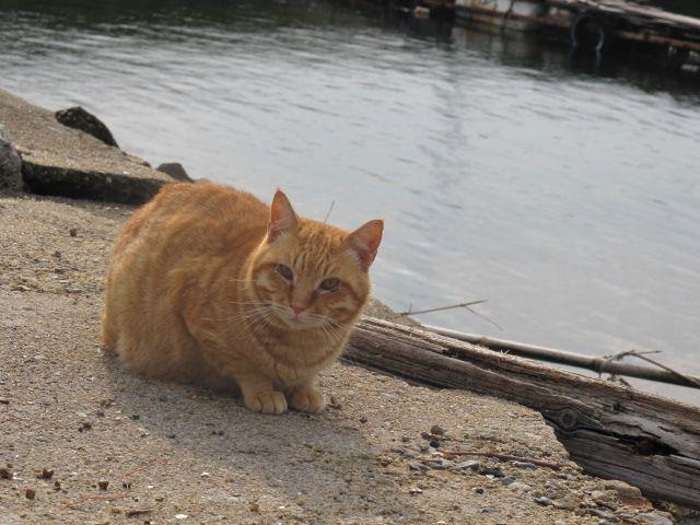 Iejima Cat 家島の猫