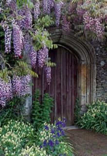 The Garden House, UK. Thanks for posting. Interesting shot of Japanese wisteria growing on wall, as opposed to pergola.