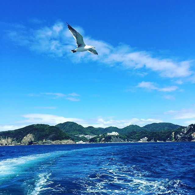 【11yuki4】さんのInstagramをピンしています。 《カモメがずっと船についてくる🚢⚓ #旅行#家族旅行#家族旅行1日目 #静岡#伊豆#下田#海#山 #クルーズ#クルージング #船#クルーズ船 #カモメ #快晴#眺めがいい #自然》
