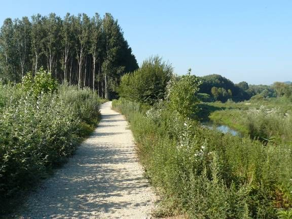 Pekin Robin habitat, Lucca