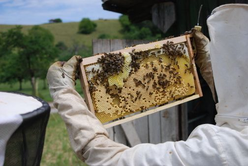 Friends visiting the beekeeper in the Black Forest