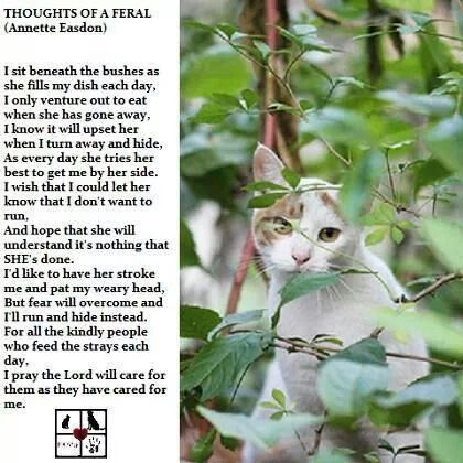 Thoughts Of A Feral