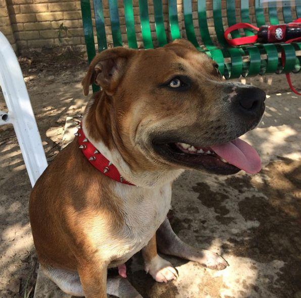 Chilling out at Hammond Dog Park at Zemurray Park - Hammond, LA - Angus Off-Leash #dogs #puppies #cutedogs #dogparks #hammond #louisiana #angusoffleash
