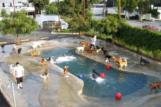 103 Best Images About Cool Pools On Pinterest Quails
