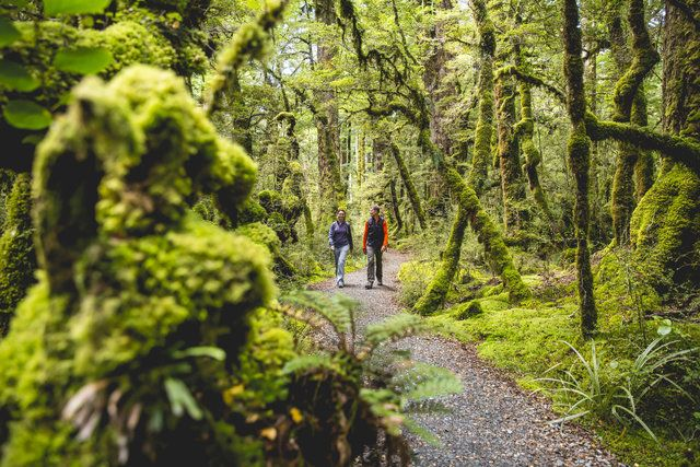 Everywhere you go in New Zealand, there are tracks leading off through native forests to waterfalls, lakes or spectacular mountain views.