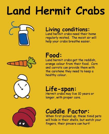 Things about hermit crabs...need to know for class pet :)