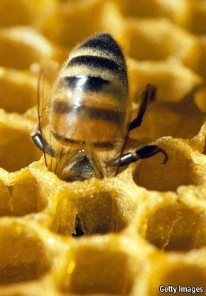 Pesticides are killing bees. Please read the Economist article 'Bee Off' in the January 28th, 2012 issue.