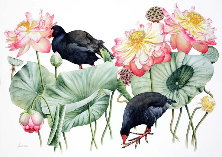 Heidi Willis: Dusky Moorhens and Lotus. Watercolour 102×73.5cm / 40.2x29inch Finalist Focus on Nature IX exhibition, NY State Museum, 2006...