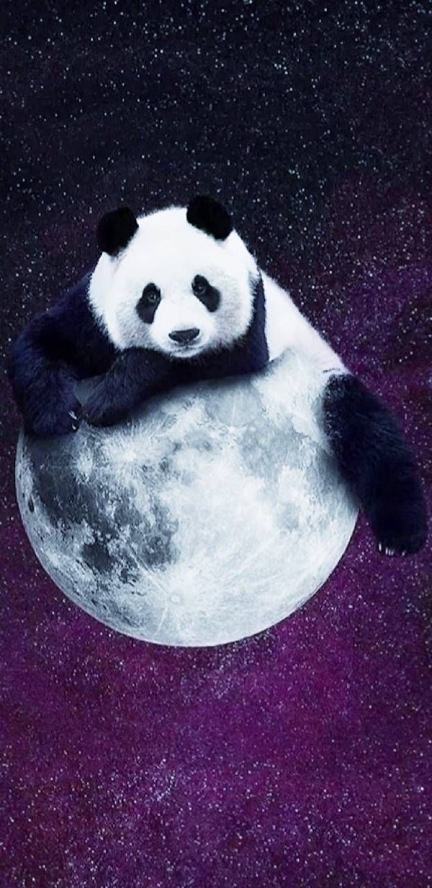 Download Pandamoon Wallpaper By Princessofwallpapers 07 Free On Zedge Now Browse Millions Of Popular Panda Bears Wallpaper Cute Panda Wallpaper Panda Art